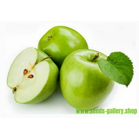 Graines Pomme Granny Smith (Malus sylvestris)
