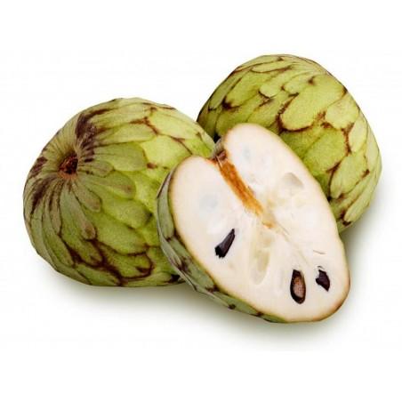 Cherimoya, Zucker Apfel Samen (Annona cherimola)