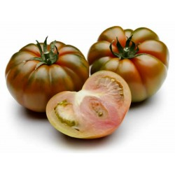 Costoluto Pachino - Sic. Heirloom Tomato Seeds Seeds Gallery - 5