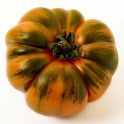 Costoluto Pachino - Sic. Heirloom Tomato Seeds Seeds Gallery - 7