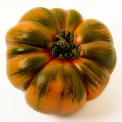Costoluto Pachino - Sic. Heirloom Tomato Seeds Seeds Gallery - 7