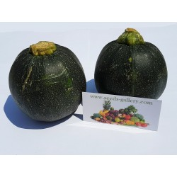Zucchini Seeds Tonda Chiara di Toscana Seeds Gallery - 1