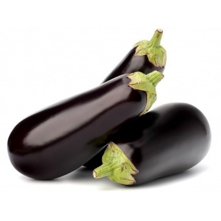 Medium Long Eggplant Seeds