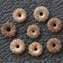 Common Mallow Seeds (Malva sylvestris)  - 1