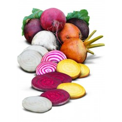 Rainbow Beetroot Seeds  - 2