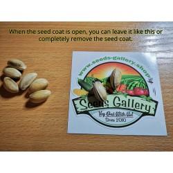 Pistachio Seeds (Pistacia vera) (Antep Pistachio)  - 4