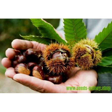Chokeberry Seeds (Aronia melanocarpa)