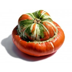 Red Turban Squash Seeds