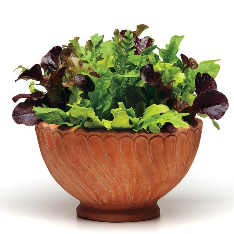 Mixture of Best Lettuce Seeds  - 2