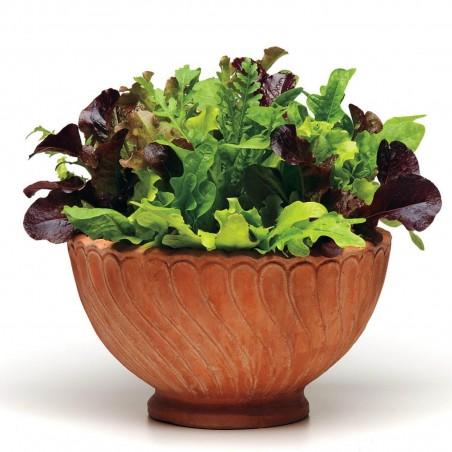 Mischung der besten Salat - Samen