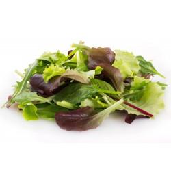 Mixture of Best Lettuce Seeds  - 1