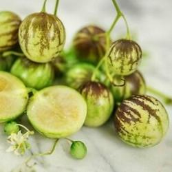 Tzimbalo - Mini Pepino seme (Solanum caripense)  - 3