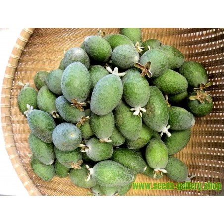 Feijoa, Pineapple Guava Seeds