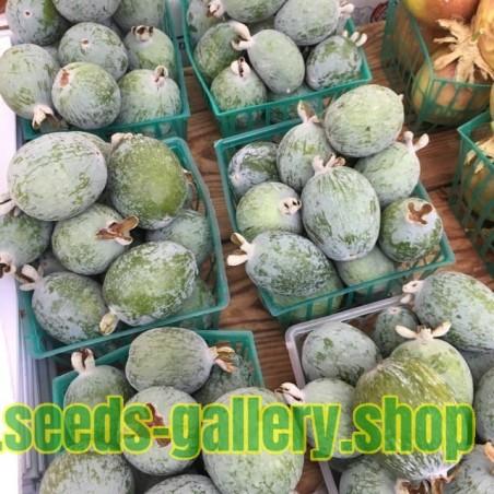 Graines Le Nashi (Pyrus pyrifolia)