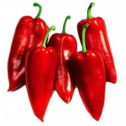 Prizrenka sweet pepper seeds  - 2