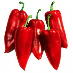 Sementes de pimenta doce Prizrenka  - 2