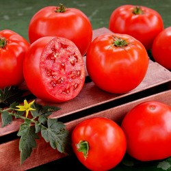 Yüksek Kaliteli hibrid domates tohumları Lider F1  - 3