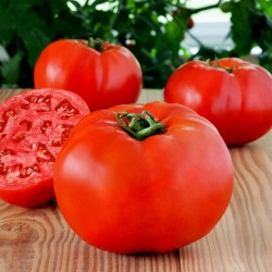 High-Quality Hybrid Tomato Seeds Profit F1  - 2