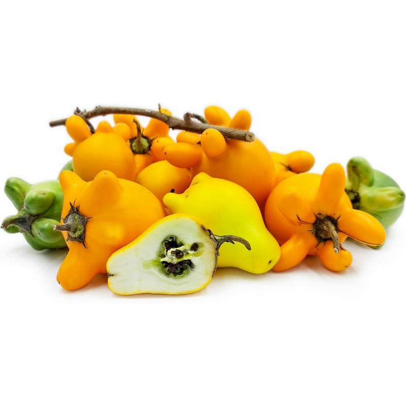 Nipplefruit Seeds - Cow's udder (Solanum mammosum)  - 4
