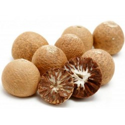 Бетелевая пальма, Арека катеху семена (Areca catechu)  - 3