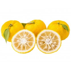 Yuzu Seeds Japanese citrus fruit -20°C (Citrus junos)  - 2