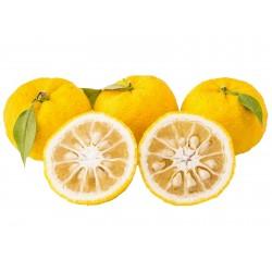 Yuzu Seme Japanski citrus -20 ° C (Citrus junos)  - 2