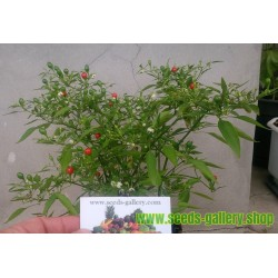 Chili Chiltepin Bonsai Seeds