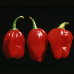 Chili Numex Suave Red Seeds  - 2