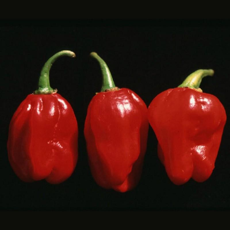 Numex Suave Red Chili Frön  - 2