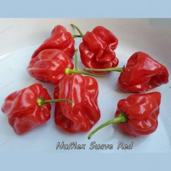 Σπόροι τσίλι Numex Suave Red  - 1