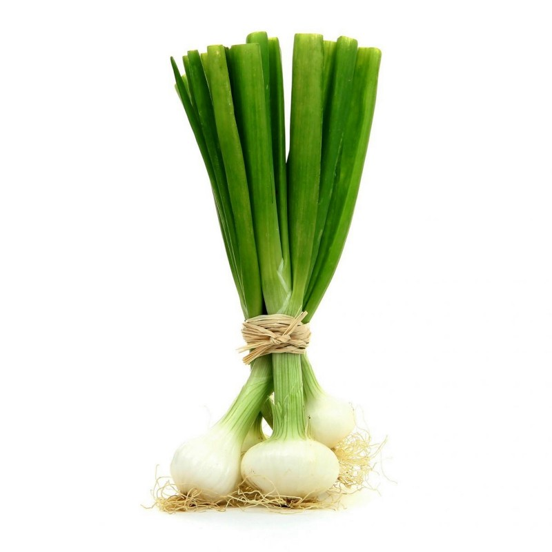 White Lisbon Bunching Onion Seeds (Allium cepa)  - 2