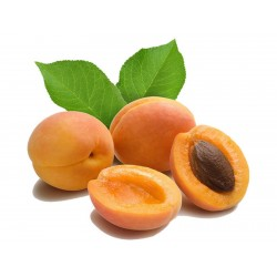 Manchurian Aprikos frön  - 5