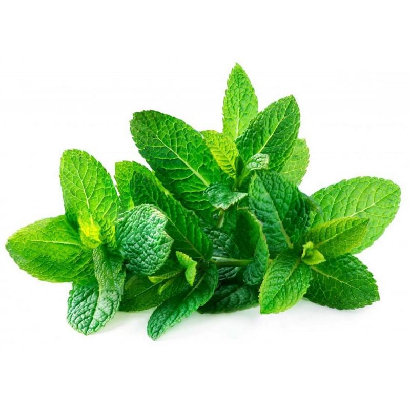 Grüne Minze Samen (Mentha spicata)  - 2