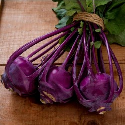 Kohlrabi Seeds Purple Vienna  - 2