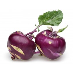 Kohlrabi Seeds Purple Vienna  - 4