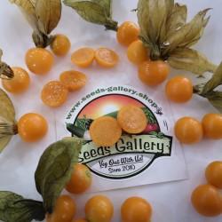 Sementes Lanterninha (Physalis peruviana) Seeds Gallery - 3
