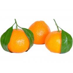 Småcitrus Mandarin Frön (Citrus reticulata)  - 4