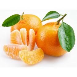 Mandarine Samen Winterharte Sorte (Citrus reticulata)  - 5