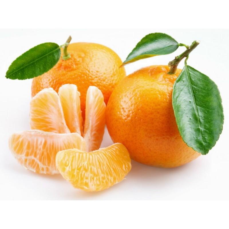 Småcitrus Mandarin Frön (Citrus reticulata)  - 5
