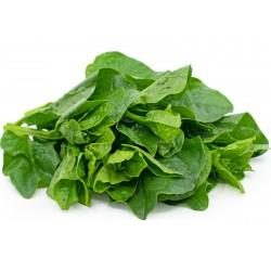 Malabar Spinach, Ceylon Spinach Seeds (Basella alba)  - 5
