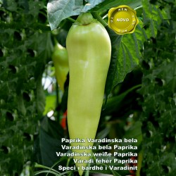 Varadinska Bela paprika seme  - 2