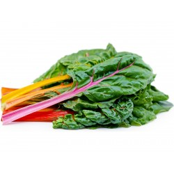 Swiss Chard Rainbow Seeds  - 4
