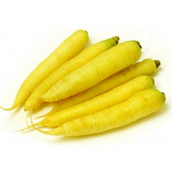 Giant Yellow Carrot Seeds  - 6