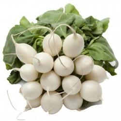 Beyaz Yuvarlak Kış Turp tohumları  - 3
