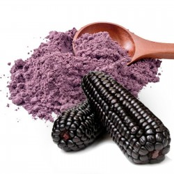 "Purple Corn  Seeds - Maíz Morado ""Kculli"" Seeds Gallery - 6"