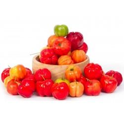 Barbadoskörsbär eller Acerola Frön (Malpighia glabra)  - 8