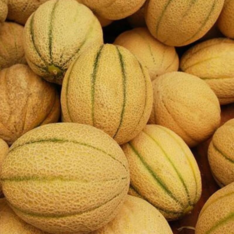 Melon CANTALOUPE Naranja MUY DULCE 100 Semillas seeds