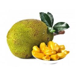 Jackfrukt Frön (Artocarpus...