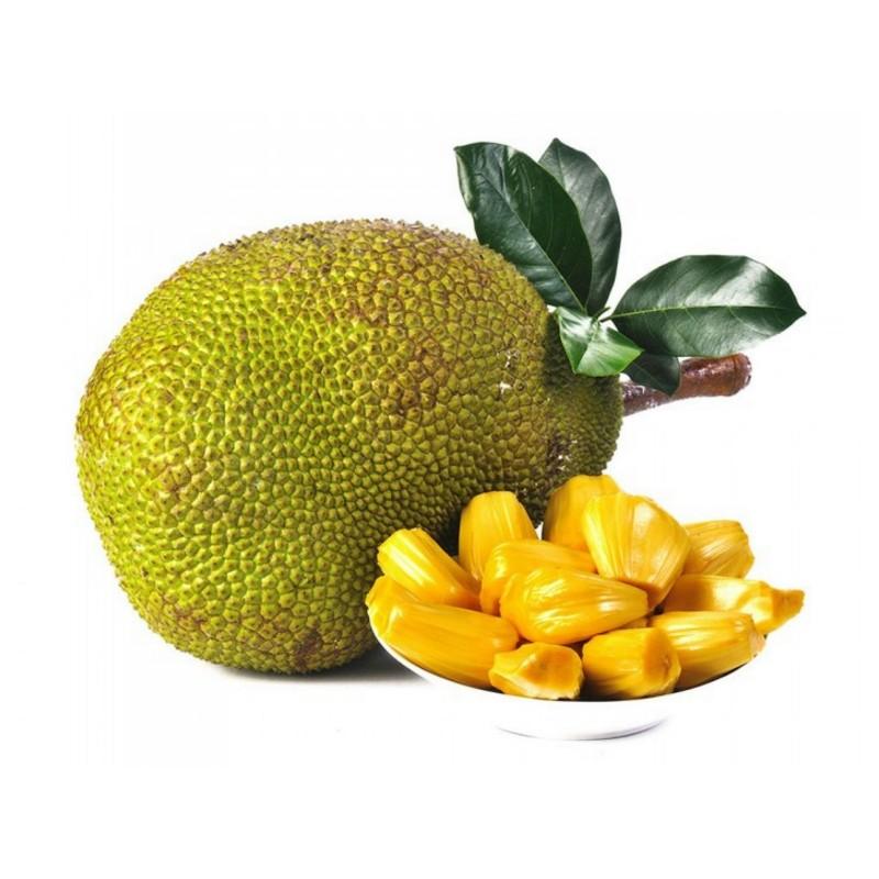 Jackfrukt Frön (Artocarpus heterophyllus)  - 8