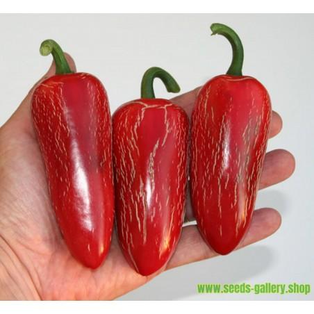Jalapeno M Frön (Capsicum annuum)